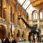Workshop this month – Anatomy Drawing Class at Natural History Museum Drawing Class