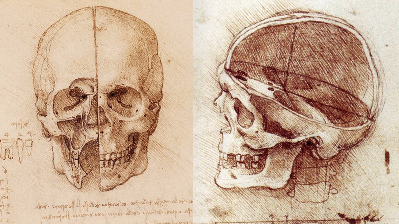Workshop This Month Anatomy Drawing Class At Natural History